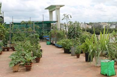 ShramajeeWiki: Organic Terrace Garden